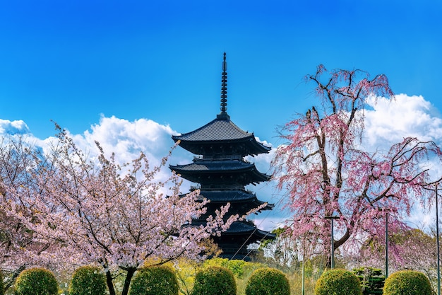 Fiori di ciliegio e pagoda in primavera, kyoto in giappone.