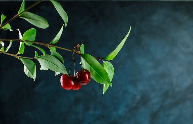 Cherry branch side view on a grungy blue background