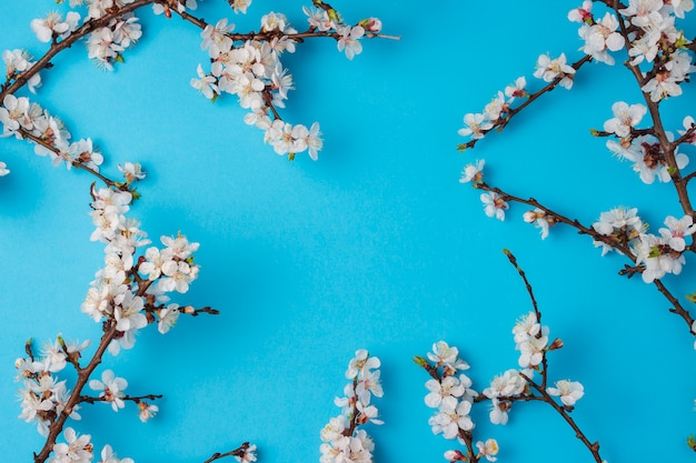 Cherry branches with flowers on a bright blue background.
