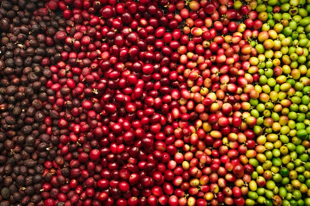 Cherry coffee beans, red coffee ripeness dry process coffee