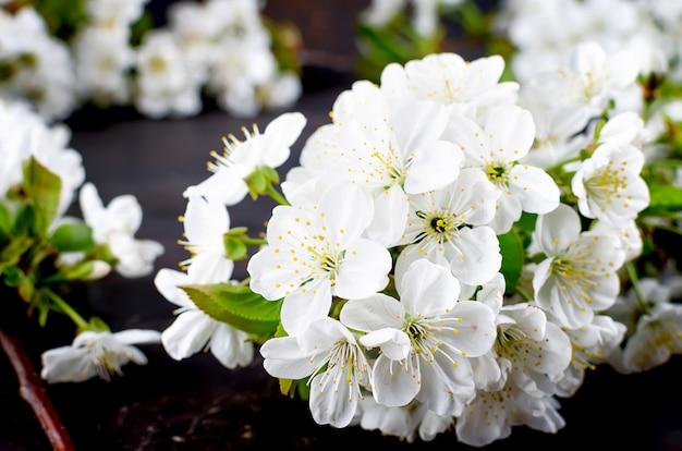 Cherry flowers on dark woodenon