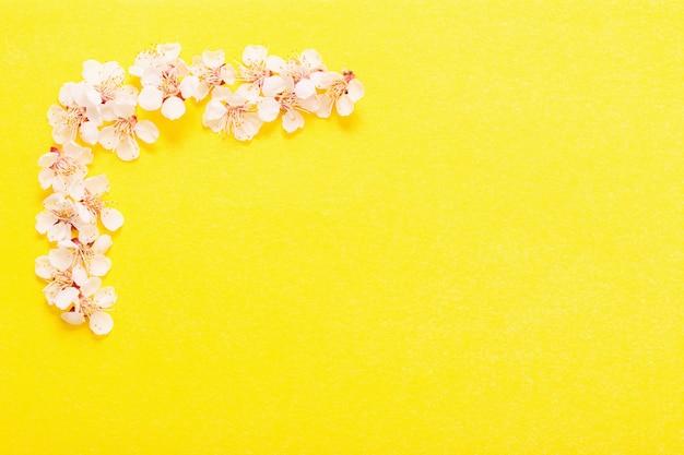 黄色の紙の背景に桜の花