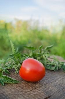 Помидор черри на корню. спелые свежие помидоры черри на ветке. ветка томата вишни