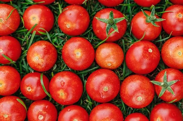 ミニトマトが草の上に一列に並んでいる野菜の明るい背景画像
