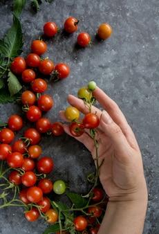 Cherry tomatoes on vine hand holding tomatoes on dark background