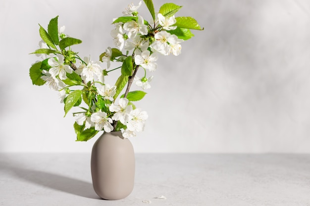 Cherry tree blossoms in beige vase in sunlight interior design coziness and decoration concept