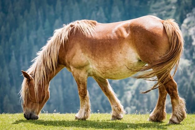 Каштан лошадь, пасущаяся на лугу в пиренейских горах