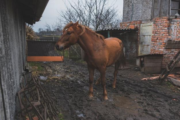 Каштановая лошадь во дворе