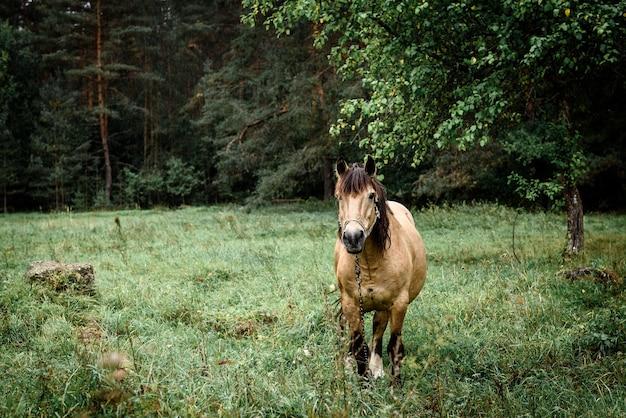 春に野原に立つ栗馬。動物の肖像画