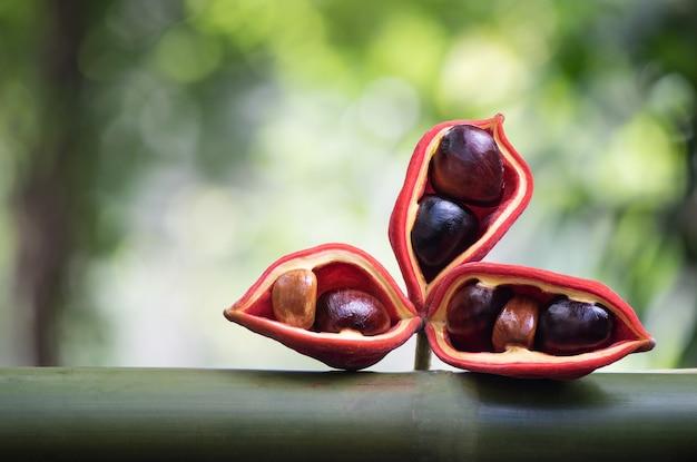 ボケの自然の表面に栗またはピンポンノキの果実。