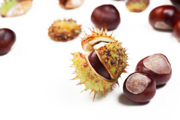 Chestnut on a white