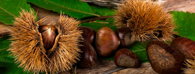 Chestnuts and chestnut bur.
