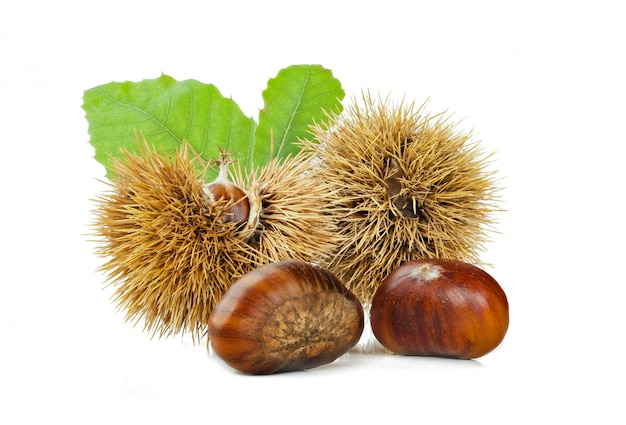 Chestnuts and chestnut bur