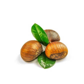 Chestnuts, ripe and unpeeled, on the white background, closeup