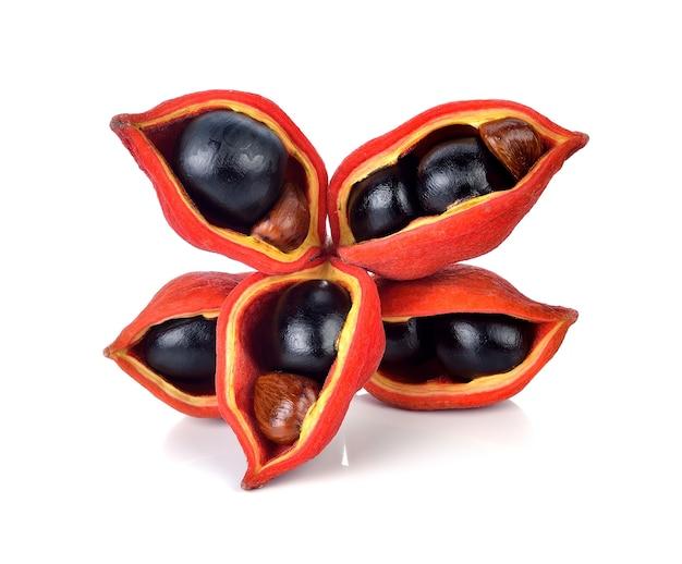 Chestnuts (sterculia monosperma) on white background.