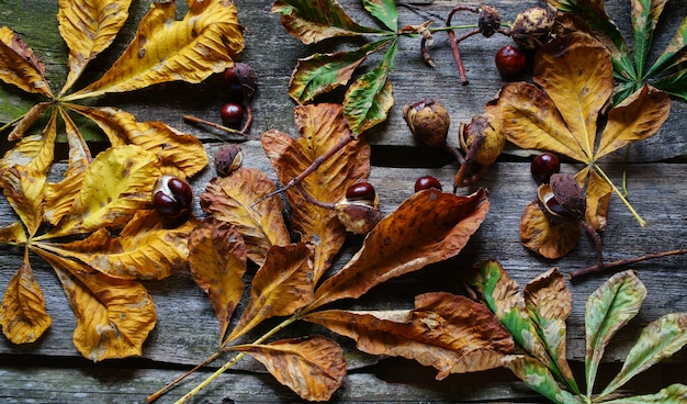 Chestnuts and yellow leaf on the old wooden table autumn concept