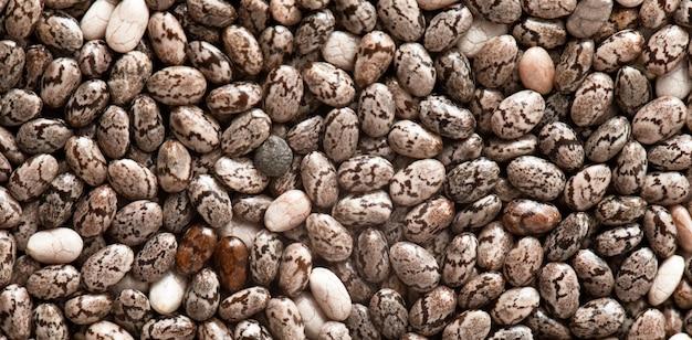 チアシード、食感、貴重な食品、オメガ3酸とビタミンの供給源。