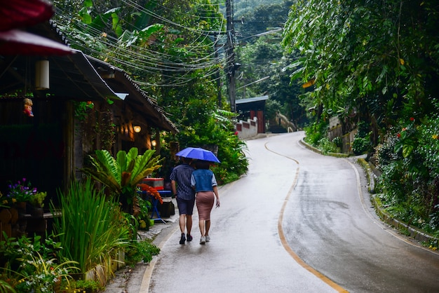 Chiang mai thailand november 10 2019 ban mae kampong village is surrounded by the forest area wit