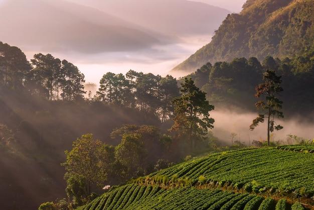 치앙마이 여행 자연 사진 사진 아름다운 지방의 랜드 마크,