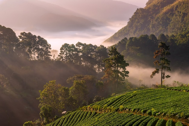Chiang mai trip  nature pictures photo beautiful landmark of the province