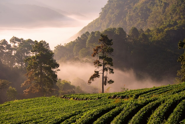 Chiang mai trip  nature pictures photo beautiful landmark of the province,