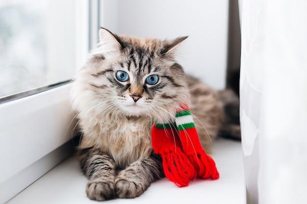 窓枠に横たわってカメラのレンズを見ている首に赤いスカーフを持つシックな猫