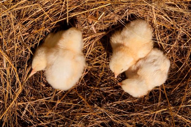 둥지에 병아리