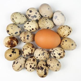 Куриные и перепелиные яйца на белом фоне. здоровое и витаминное питание