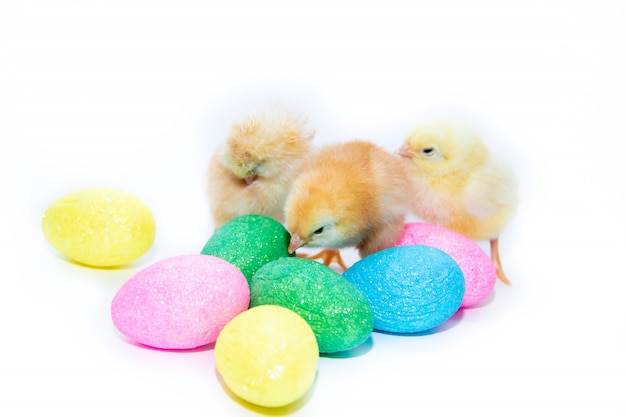 Chicken and easter eggs on white background. painted eggs. religious holiday. easter.