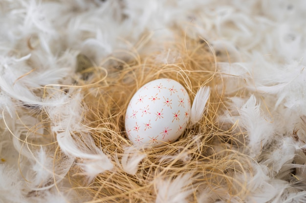 Chicken egg on hay between heap of quills