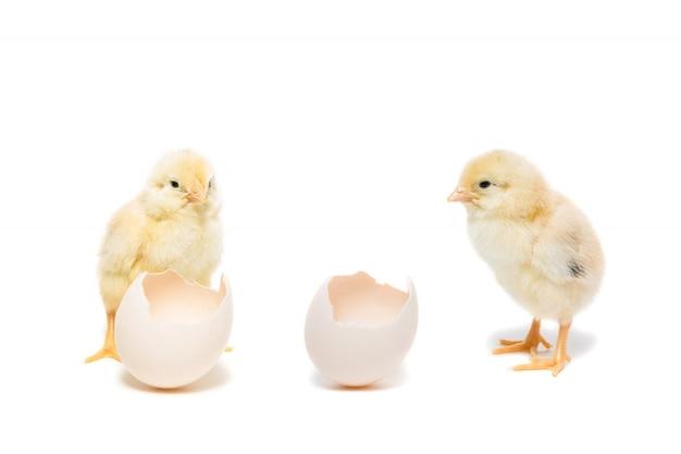 Chicken egg on white