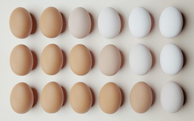 닭고기 달걀은 밝은 배경에 가장 어두운 색에서 가장 밝은 색으로 정렬되고 정렬됩니다. 3d 렌더링