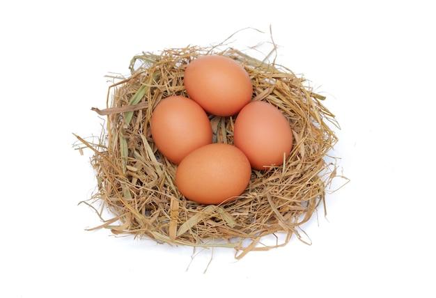 흰색 배경에 격리된 둥지에 있는 닭고기 달걀
