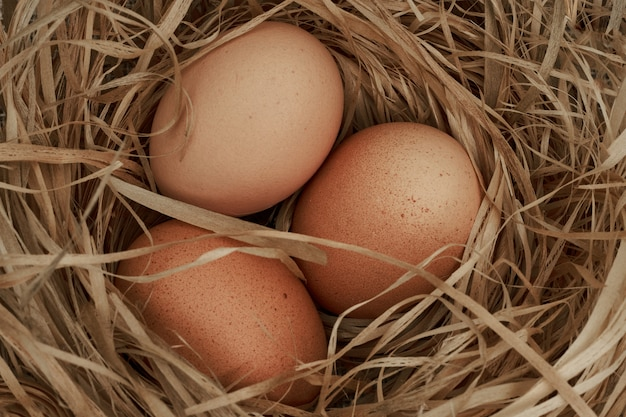 Chicken eggs in the nest. close up.