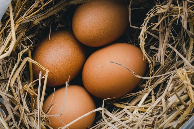 자연 유기농 홈메이드 제품을 배양하기 위한 잔디 둥지에 있는 닭고기 달걀