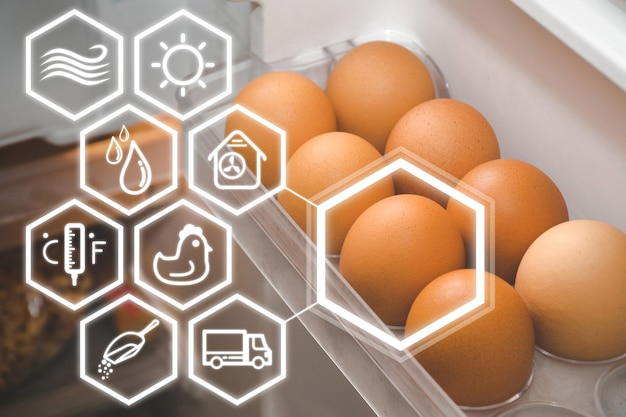 Chicken eggs on the refrigerator shelf with white icon show the story.
