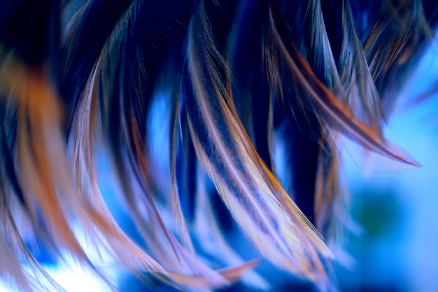 Chicken feathers in darktone and blur style for background