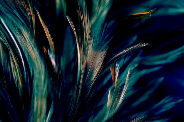 Chicken feathers in soft and blur style for the background, abstract art