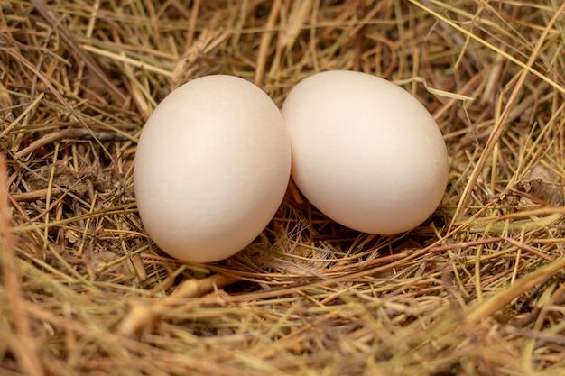 Куриные домашние яйца в гнезде