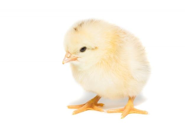 Chicken on white
