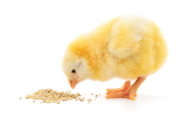Курица с едой на белом фоне.