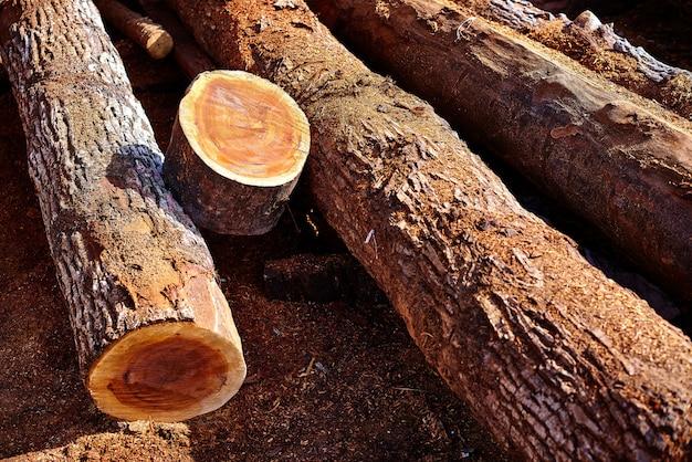 Chico zapote manilkara zapota wood mexico