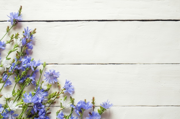 Chicory flowers on white wood