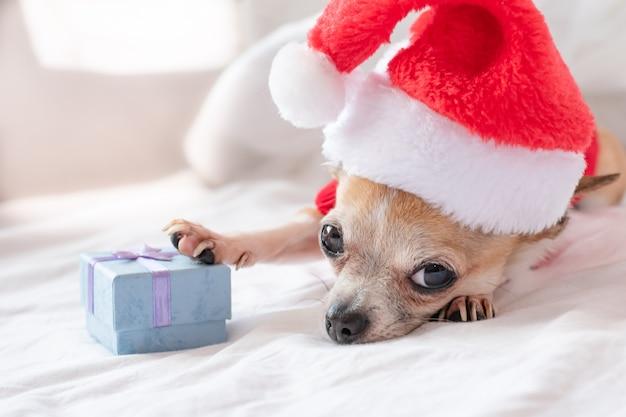 Собака чихуахуа в шапке санта-клауса лежит на белой кровати в новый год