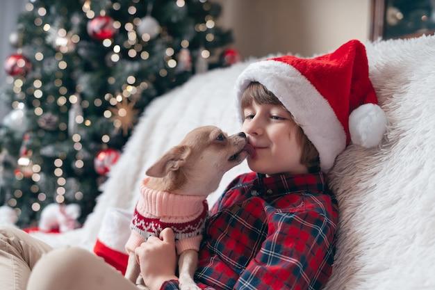 クリスマスセーターのチワワ犬は小さな男の子をなめます。
