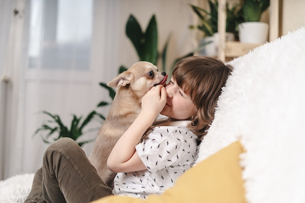 Chihuahua dog licks little laughing child's face on couch with blanket. portrait of a happy