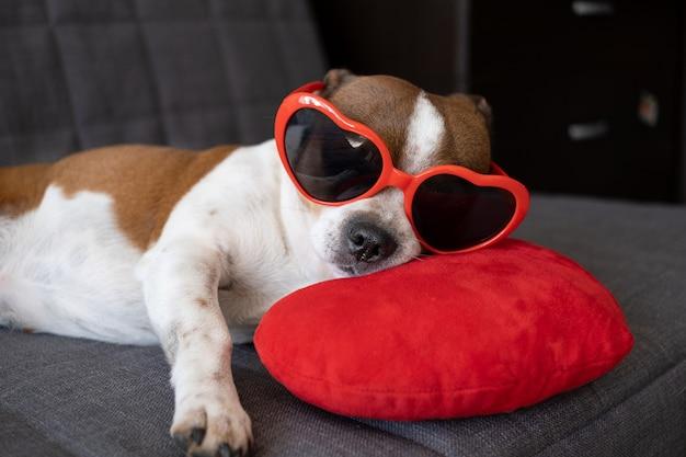 ハートのサングラスで赤いぬいぐるみの心を持つチワワ犬