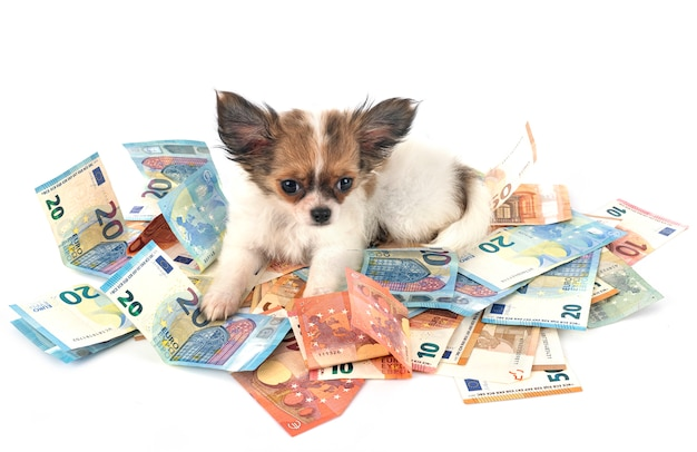 Owning a dog requires money