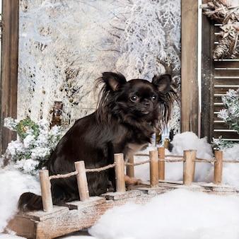 冬の風景の橋の上に座っているチワワ