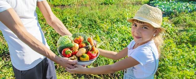 手に野菜を持って庭で子供と父親。セレクティブフォーカス。自然。